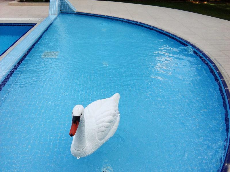 Poolline Yüzen Tip Beyaz Kuğu