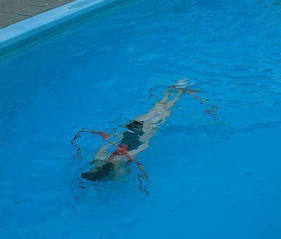 - Sualtı Yarım Çember Seti 4'Lü, Havuz Oyun Seti